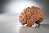 Not A Brainiac